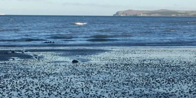©duventdansmesvalises audinghen plage abandonnée